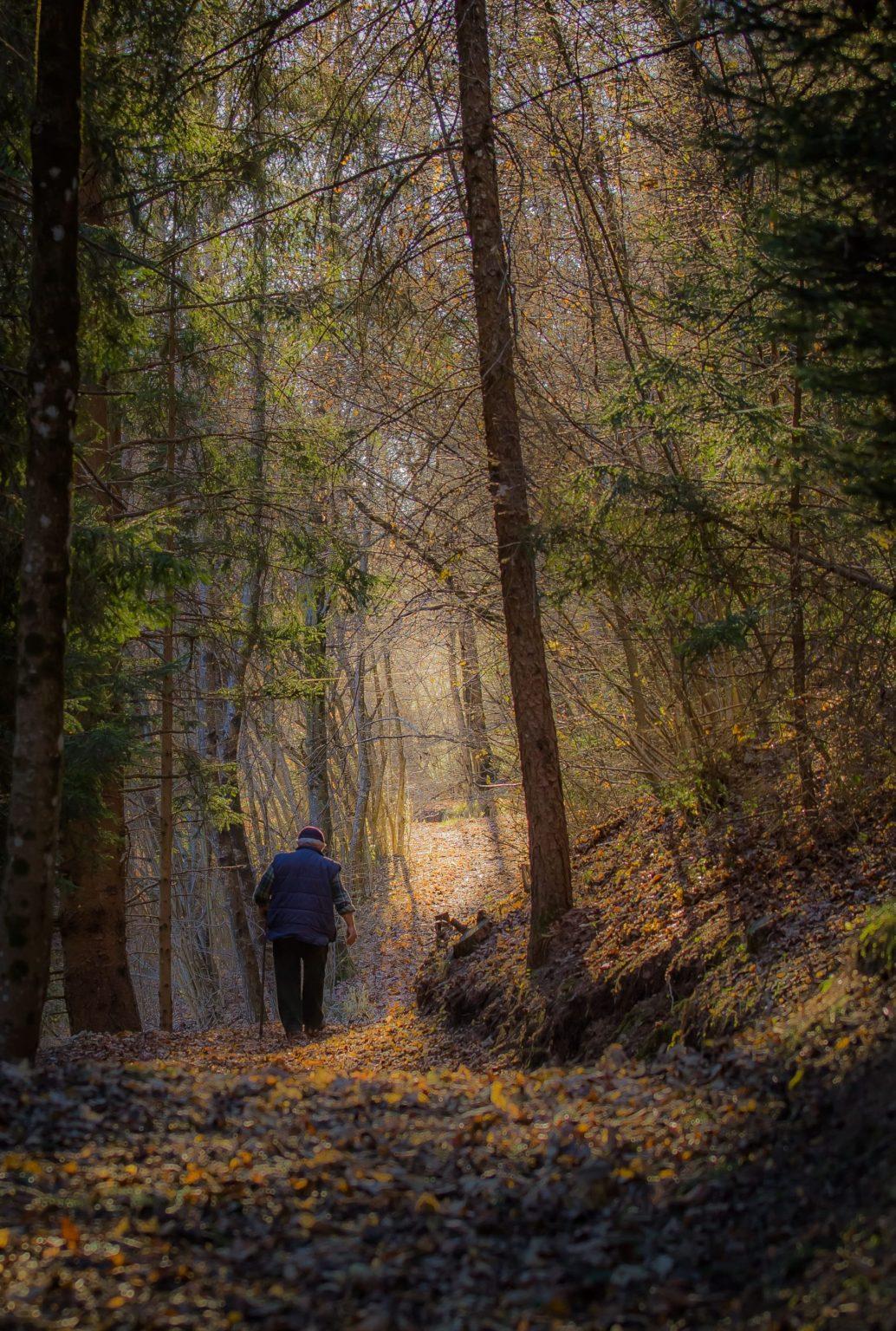 Nel bosco d'autunno